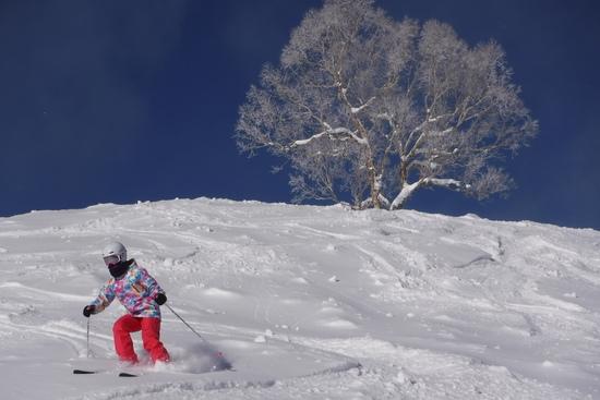パウダー三昧|志賀高原 熊の湯スキー場のクチコミ画像1