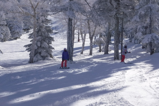 パウダー三昧|志賀高原 熊の湯スキー場のクチコミ画像2