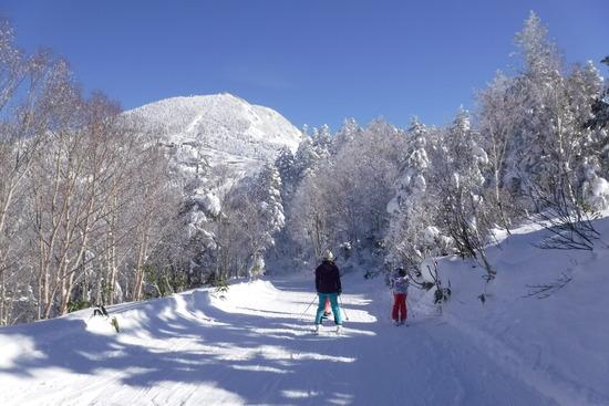 パウダー三昧|志賀高原 熊の湯スキー場のクチコミ画像3