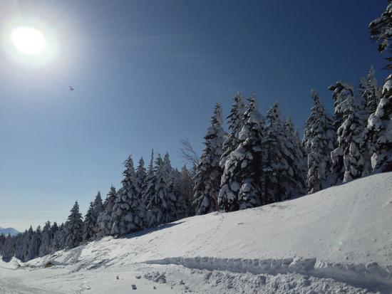 エキスパートレンタルでいろんなスキー板にトライ|パルコールつま恋スキーリゾートのクチコミ画像1