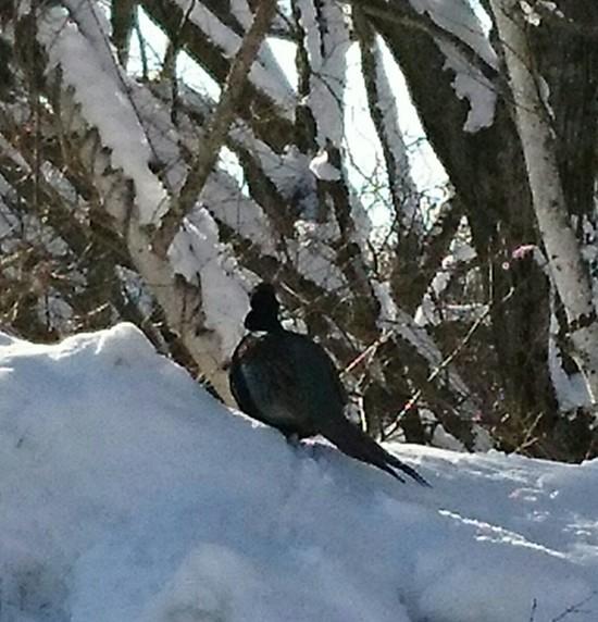 爽快な青空の菅平でした。|菅平高原スノーリゾートのクチコミ画像3