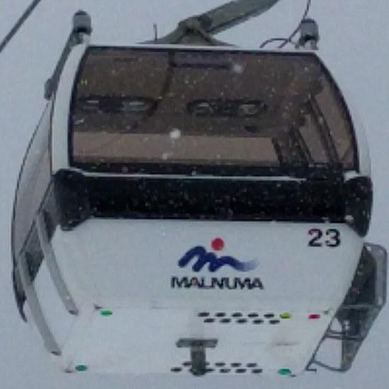 こっち見てる。|丸沼高原スキー場のクチコミ画像