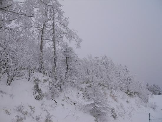寒かったがサラサラ|志賀高原リゾート中央エリア(サンバレー〜一の瀬)のクチコミ画像3