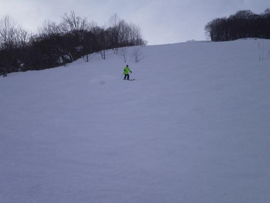最高の雪質|白馬コルチナスキー場のクチコミ画像
