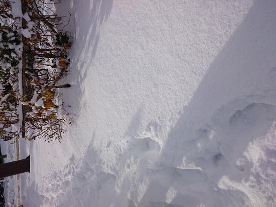 妙高杉ノ原スキー場のフォトギャラリー1