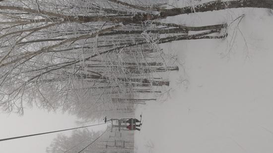 雪も人も少ないよ 栂池高原スキー場のクチコミ画像2